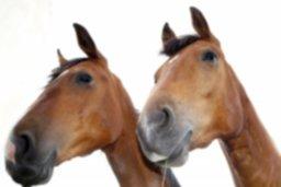 horses-379655_1920.jpg